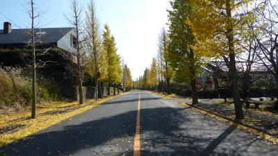 20101128_10.jpg